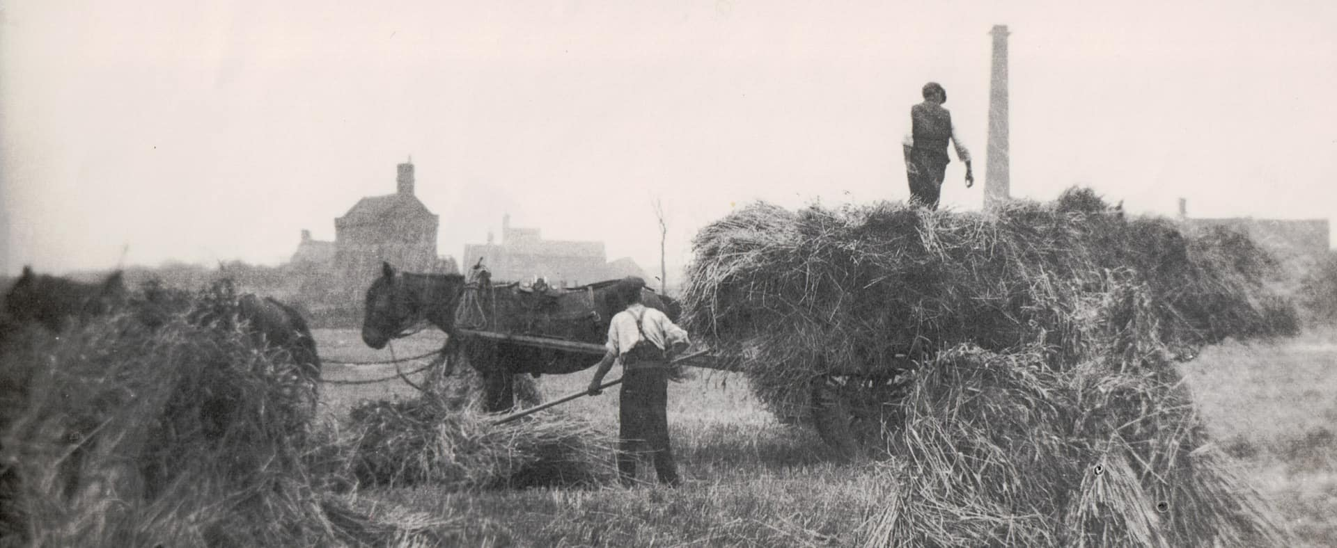 Wheat harvesting, Lion Farm. Date uknown, possibly 1930s