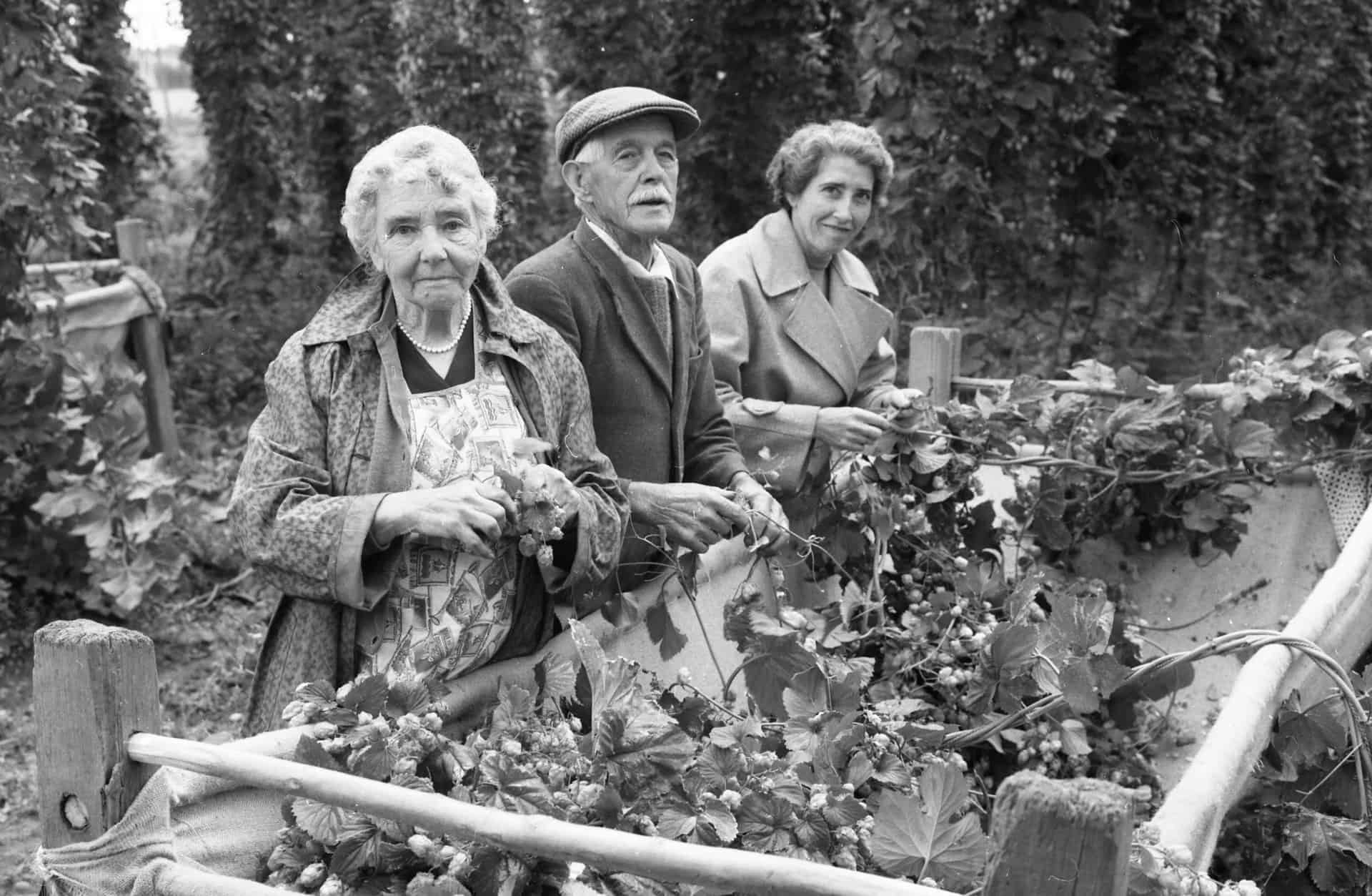Hop Pickers - a photo form the Derek Evan's Archive