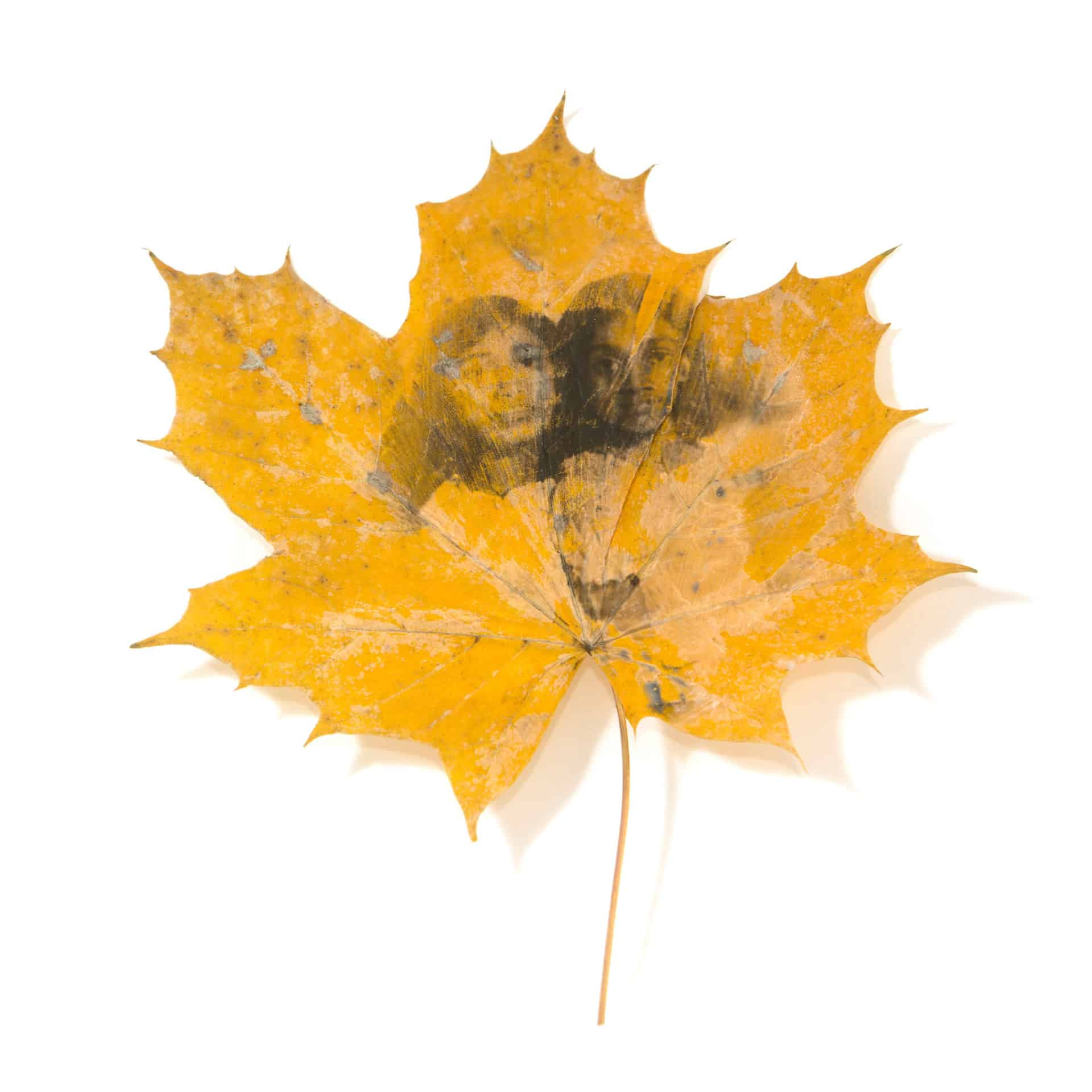 'Traces' Photograph printed onto leaf by Farhad Berahman. Commissioned as part of the Living Memory Project, 2020