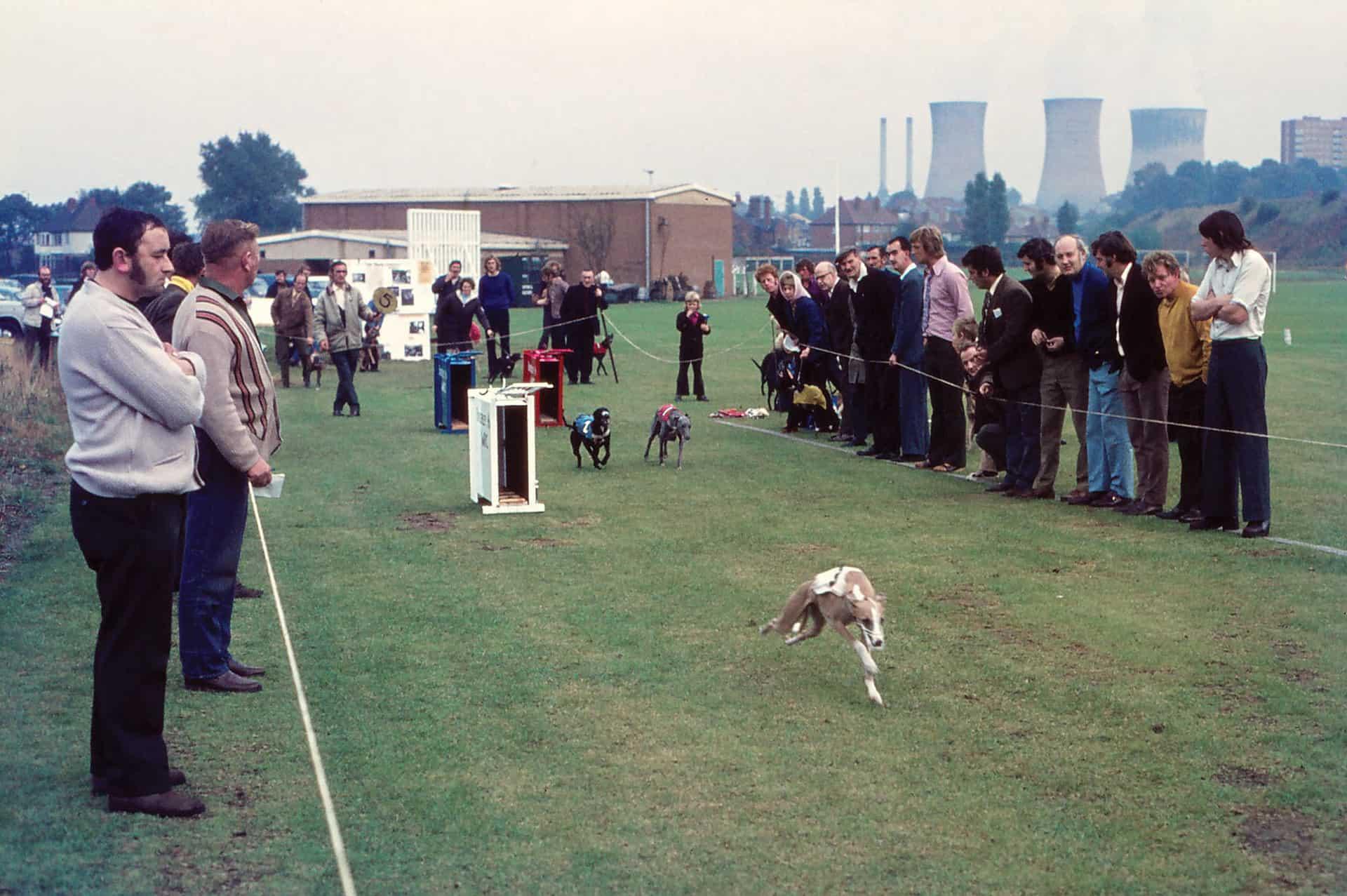 Whippet racing at the Tipton Sports Union, Gospel Oak, Tipton,